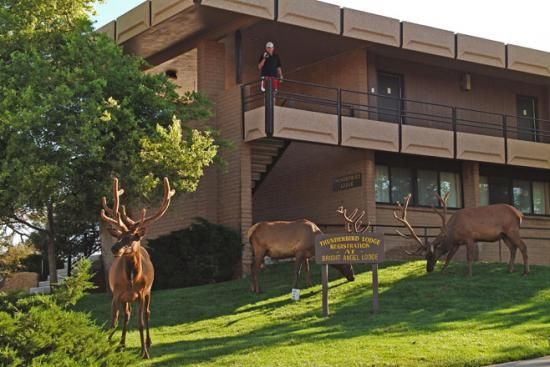 Elk and Thunderbird Lodge  (ID:SR4070). South rim Grand Canyon