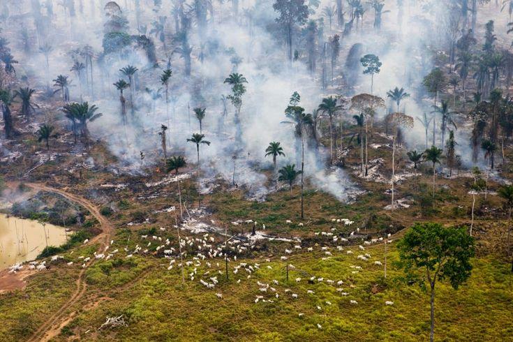 """""""A lo largo de la historia, la explotación a la que los humanos han sometido a la Tierra ha seguido esta secuencia: coloniza, destruye y sigue adelante"""", Garrett Hardin. Esta extensión incendiada de la jungla amazónica, en Brasil, es lo que la plataforma denomina la """"zona cero de la guerra contra la naturaleza"""" by DANIEL BELTRA"""