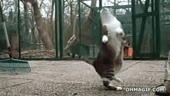 The Ballroom Dancer: | 17 Cats Who Can't Stop, Won't Stop Dancing