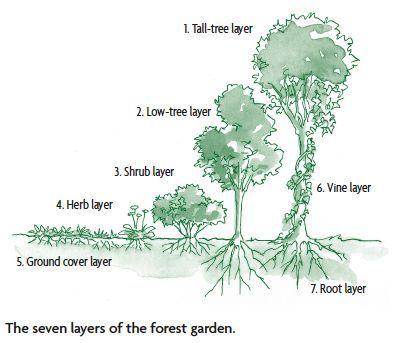 Designing a Forest Garden: The Seven-Story Garden : Chelsea Green