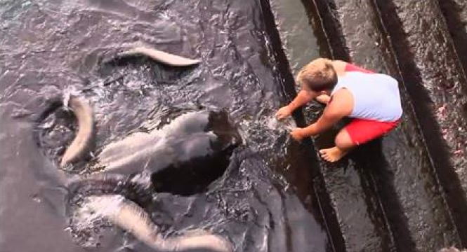 This Child Plays With A Very Strange Friend. When I Realized What It Was? My Jaw Dropped! (Manta Ray)