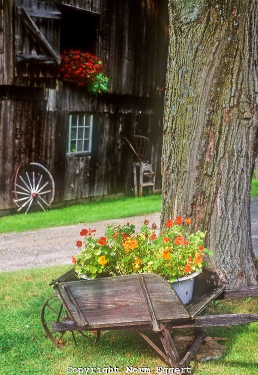 Wheelbarrow with flowers in front of an old Vermont Barn