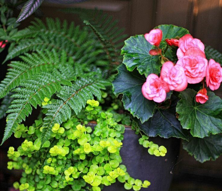 Die besten 17 bilder zu plantes vertes et fleurs auf for Conseil sur les plantes