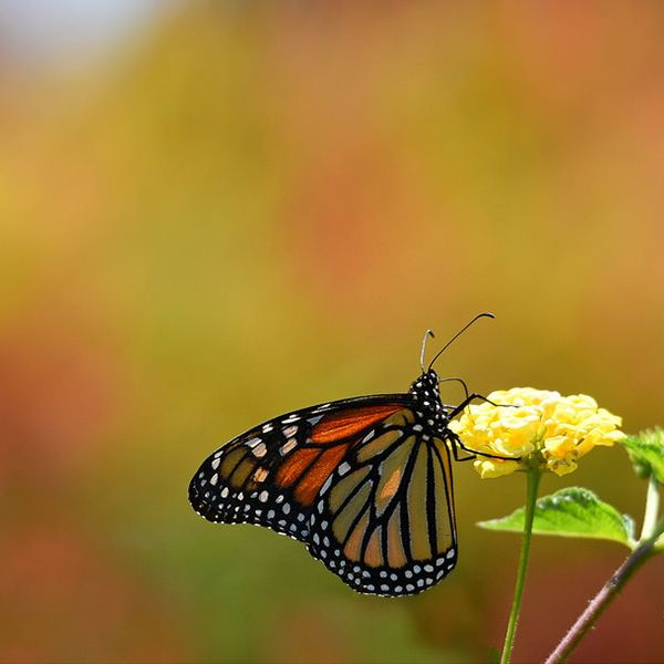 Butterfly Habitats: Quiz & Worksheet for Kids | Study.com