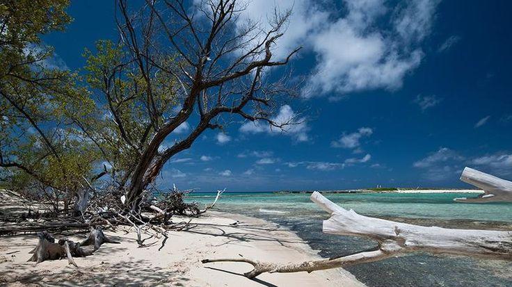 Les îles Bimini/Bahamas - Situées à seulement 80 km de la Floride américaine, les îles de Bimini sont essentiellement connues pour leurs « spots » de pêche et de plongée. De nombreuses épaves ajoutent à la beauté des fonds marins.