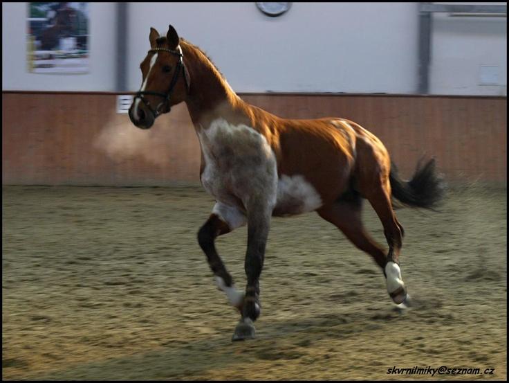 Somatic (bay) - Lorando B | Equine Color: Somatic Mutation ...