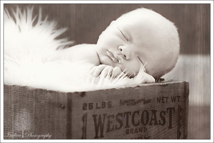 Newborn: Combos Newborns, Newborns Baby, Baby Wilson, Baby Hudson, Ideas Props, Photography Poses Ideas, Amazing Ideas, Baby Jaxon, Photography Ideas