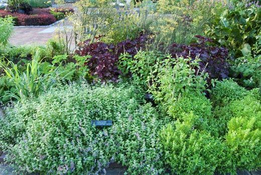 Growing An Herb Garden Gardening Delights Pinterest