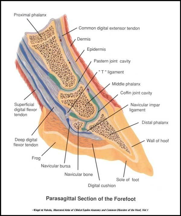 The 2657 best Anatomy note world images on Pinterest