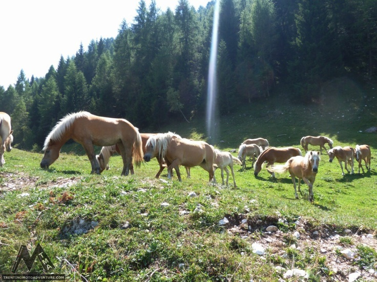 Malga Valli inTrentino: relax, buona cucina e tanta natura