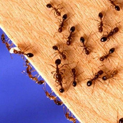 Проверенное средство от насекомых и вредителей —