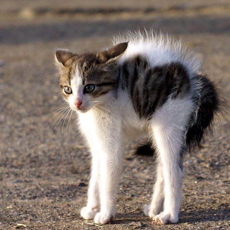 Beware of Ferocious Cat