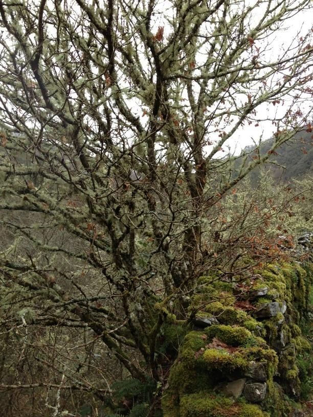 Efecto de la humedad. #Asturias