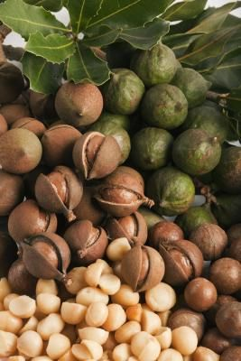 Macadamia. I used to get kilos of nuts from my tree then the possums & cockies decided they needed them more than I did..