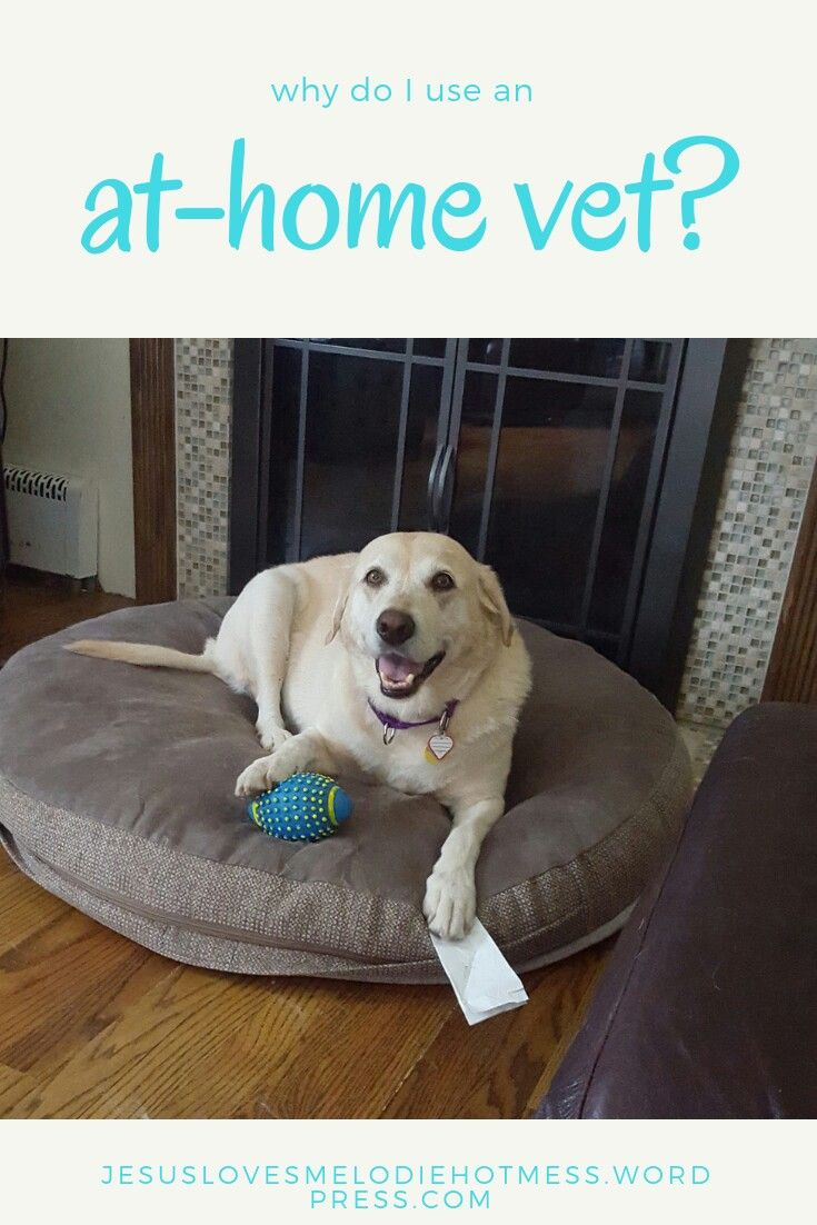 Why Do I Use An At Home Vet Vets Pets Christian Blogs