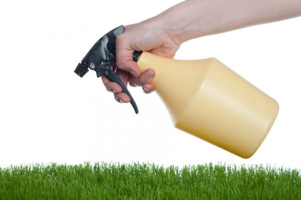Como Acabar Con Las Pulgas En La Yarda Pin En Como Hacer Insecticidas Caseros