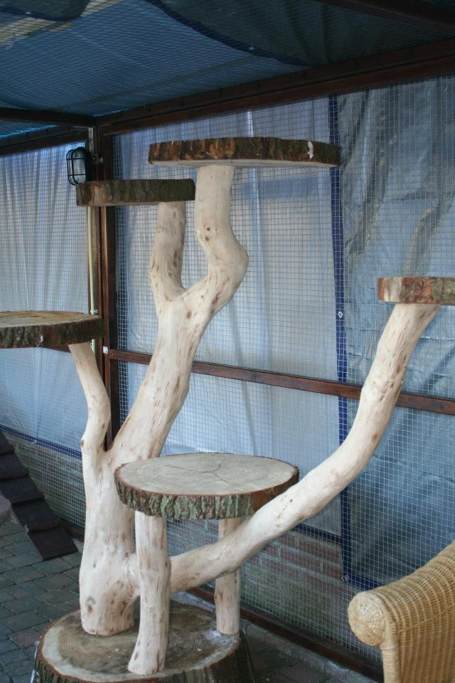 Idea For Making An Outdoor Cat Tree Cat Crazy Outdoor
