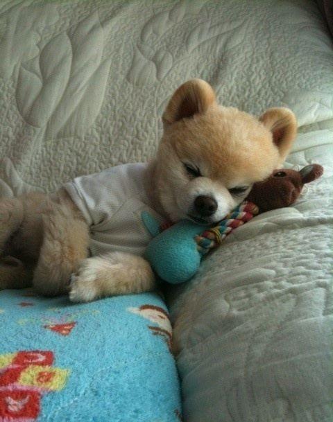 So Fluffyyyyyyyyy: Funnyanimalworld Net, Adorable Dogs, Amazing Dogs, Funnyanimalworld Resources, Childhood Things, Beautiful Dresses, Image, Pet Pet, Doggon Dogs