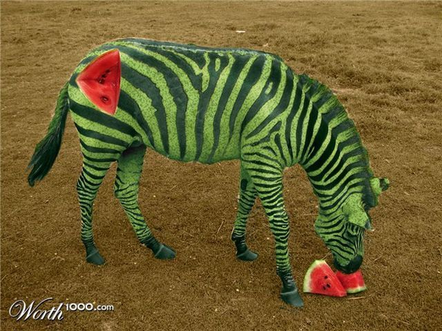 Amazing Art: What would happen if you cross an animal with a plant?  credit to Sudhi Randive photoshopped  http://sudhiart.blogspot.com/2010/10/what-would-happen-if-you-cross-animal.html#