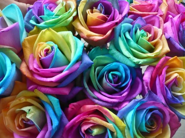 17 best images about multi color on pinterest planet for Dual color roses