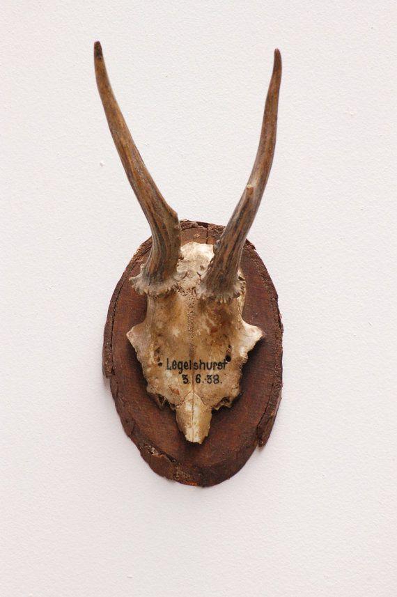 Authentique ancien trophée de chasse crâne par Frenchvintagecharm