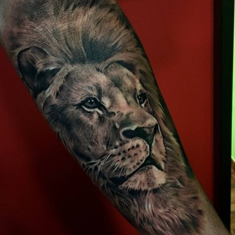 Black and grey style lion tattoo on the forearm.