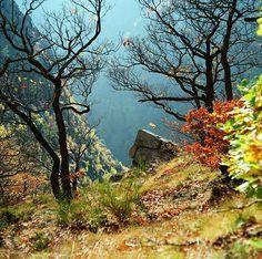 Harzer-Hexen-Stieg   Los geht es in Osterode an der Ostseite des Harzes, Zielpunkt ist die Ortschaft Thale mit ihrer berühmten Walpurgishalle auf dem Hexentanzplatz: Auf knapp 100 Kilometern verläuft der Harzer-Hexenstieg durch das nördlichste Waldgebirge Deutschlands und quert dabei den Nationalpark Harz mit seiner wilden Bergwelt. Höchster Punkt ist die Brockenkuppe in 1141 Metern Höhe