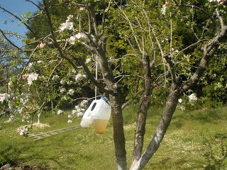 Stable Road Homestead Blog: Making Codling Moth Traps