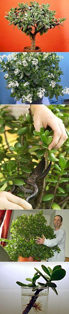 Как правильно формировать денежное дерево