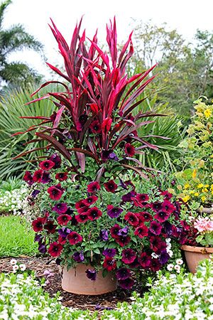 Potted Garden Flowers best 25+ container flowers ideas on pinterest | container plants