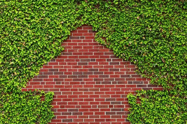 25 best ideas about haie persistant croissance rapide on - Plante grimpante feuillage persistant croissance rapide ...