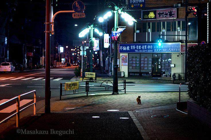 BLOG「路上のルール」 〜東京の街に暮らす野良猫たちの記録写真〜: 大きな街灯の下
