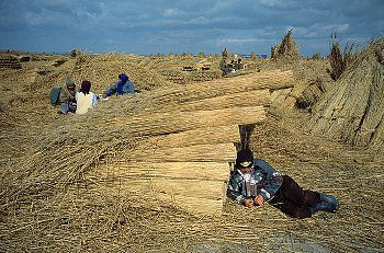 Reed Harvesters Resting Harvesters rest after bundling reeds. Romania's Danube Delta has the world's largest reed harvest. Near Tulcea, Romania.