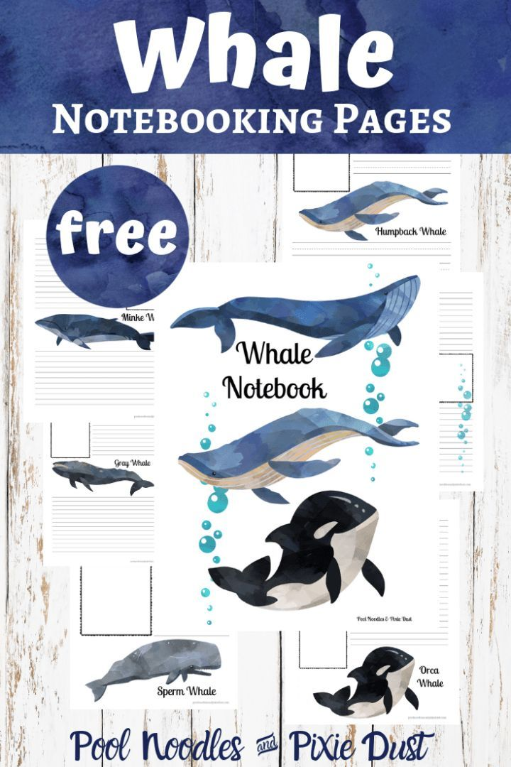 How Much Do Blue Whales Ejaculate : whales, ejaculate, Whale, Notebooking, Pages, Noodles, Pixie, Facts, Kids,, Whale,