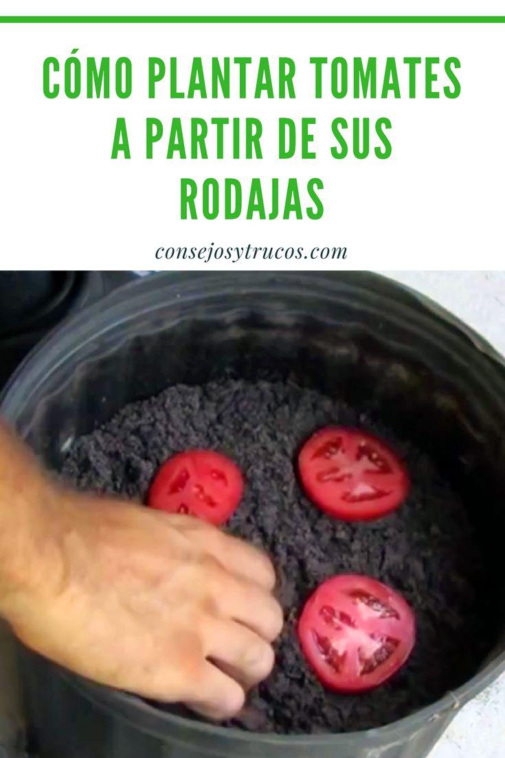 Cómo Plantar Tomates a partir de Sus Rodajas