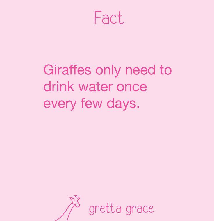 #giraffe #facts #funfacts #giraffes