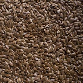 Coltivare i germogli di semi di lino  Stai guardando: Semi di lino: 8 ricette di benessere naturale