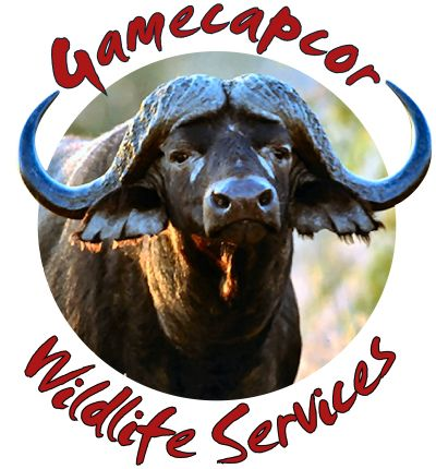Gamecapcor is a wildlife service business that provide a host of wildlife services, ranging from game trans-location to Veterinary services and auctions.