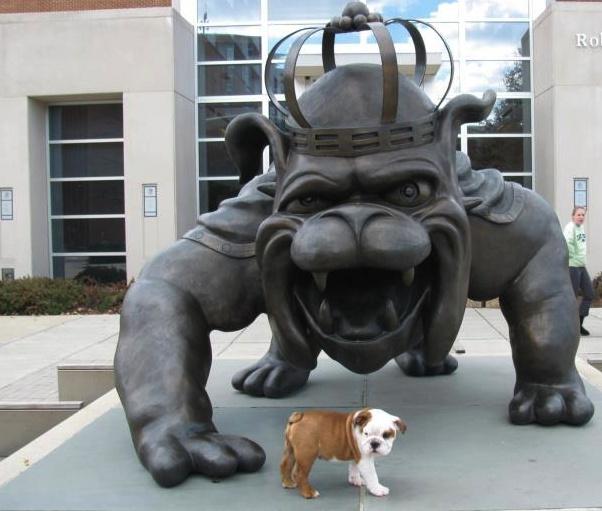 James Madison University  #Bulldogs