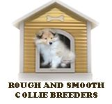 Quality Smooth and Rough Collie Breeders-See Rough Collies For Sale