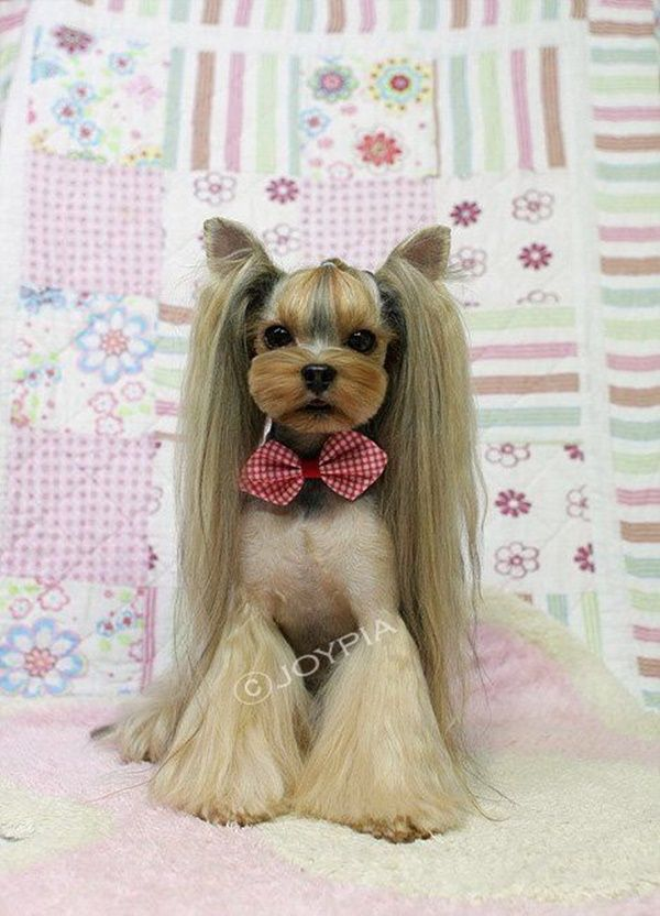 30 Different Dog Grooming Styles Dog Grooming Styles