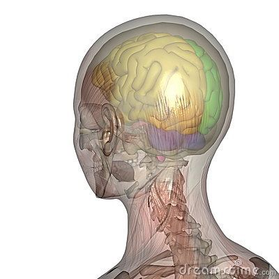 Brain Care Stock Photos, Images, & Pictures – (4,573 Images) - Page 11