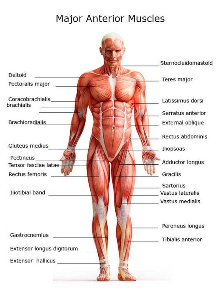 20 best Zach Ferguson unit 2 images on Pinterest | Human body, The ...