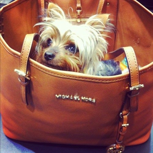 <3: Animals, Dogs, Style, Yorkshire Terrier, Furry, Pet, Puppy, Bags