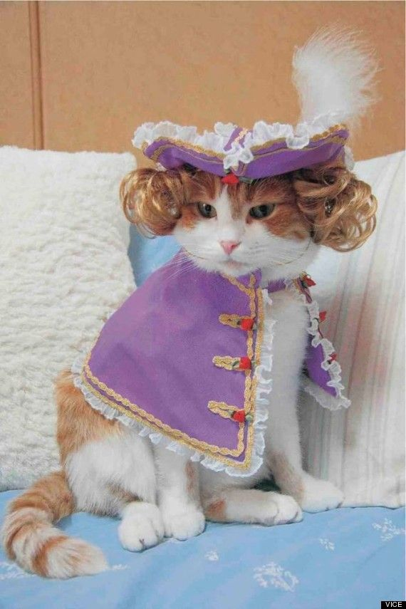 """(Cat Dressed As Liberace.) * * """" Noes piano, noes dime-store costume!"""""""