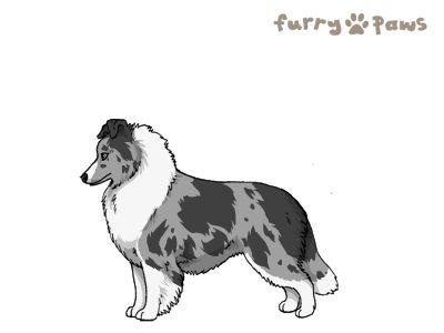 Furry Paws // UCFl Kip's A Curious Wine [1.592] 11.2's Kennel