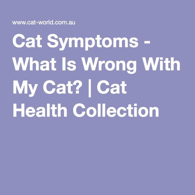 Cat Symptoms - What Is Wrong With My Cat?   Cat Health Collection