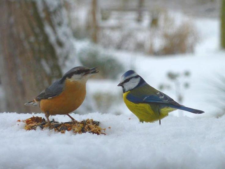 Les 23 meilleures images du tableau animaux et biodiversit du jardin sur pinterest blog - Les animaux du jardin ...