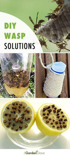 DIY Backyard Wasp Solutions • Great Ideas, Tips and Tutorials! [ Wainscotingamerica.com ] #backyard #wainscoting #design