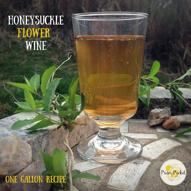 Enjoy the sweet flavor and aroma of honeysuckle year round with this one gallon honeysuckle wine recipe. A lovely flower that makes a lovely brew.